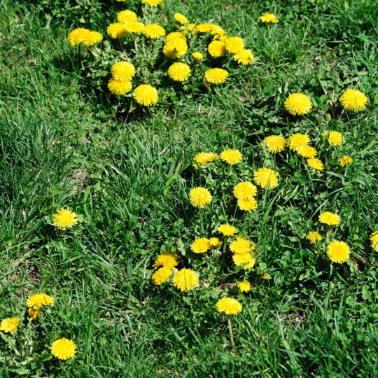 How to Control Summer Weeds