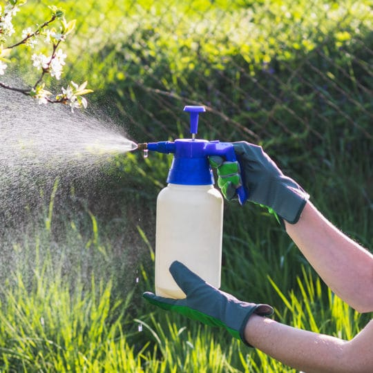 Are Pesticides Safe?