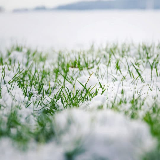 Winter Lawn Care: Your To-Do List