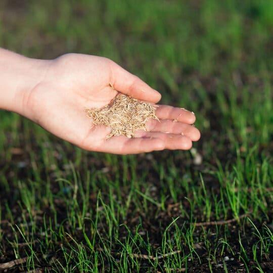 5 Lawn Seeding Tips