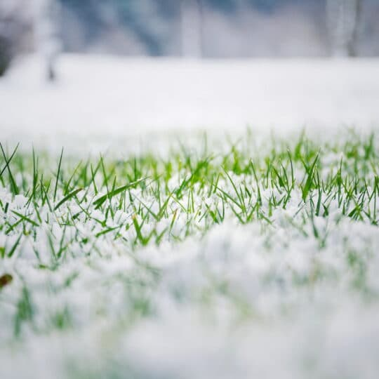 How Snow Impacts the Health of Your Lawn