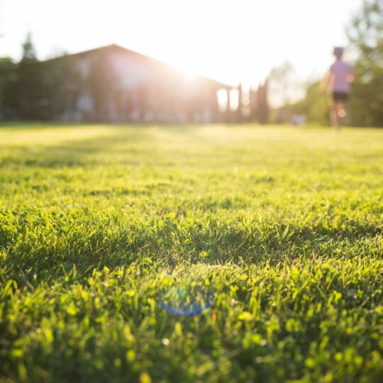 How to Protect Your Lawn from Heat Stress